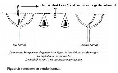 figuur2.jpg