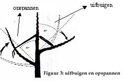 Snoei na de aanplant: www.boomgaardenstichting.be/html/raadgevingen/snoeinaaanplant.html